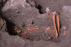 1981年:枌洞窟遺跡出土縄文時代人骨