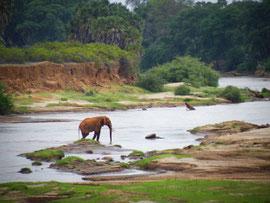 Elefante  Tsavo Est in2kenya safari watamu kenya