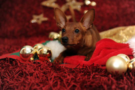 Frohe Weihnachten wünscht Dwarf Rat Pack´s Nutella