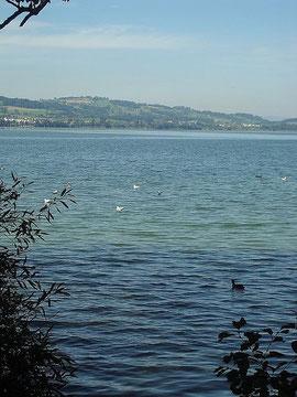 Blick von der Festhalle auf den See