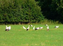 In den Wässerwiesen (Foto: S. Kochenburger)
