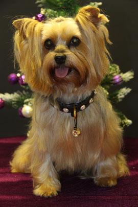 Familienhund Vicky mit dem kleinsten Fressnapf der Welt