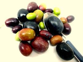 Griechische Oliven Amfissa