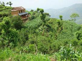 Gartenkaffee-Mischkulturen auf terrassierten Hängen