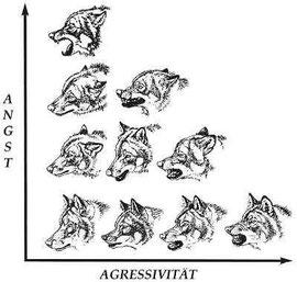 Körpersprache des Wolfs