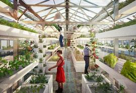 Urban Farming in Basel