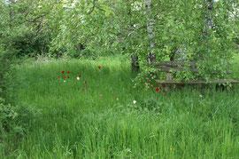 Kraftorte: Ein verstecktes Plätzchen unter den Birken