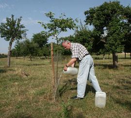 Wässern von Neupflanzungen