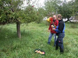 Pomologe Steffen Kahl aus Aßlar (vorn) und Klaus Nadler von der Naturschutzgruppe Ober-Mörlen bei der Sortenbestimmung im NSG Magertriften.