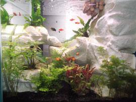 L'aquarium cascade