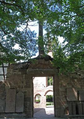 Bad Herrenalb, Wunderkiefer - ©Traudi