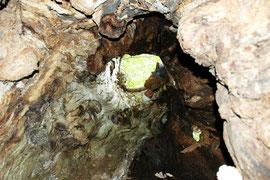 よく見てください。洞の上からのぞく千葉さんがいます。