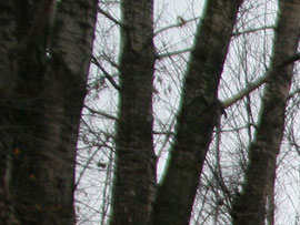 Край кадра 17 мм f/2,8 Кроп