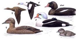 http://www.planetofbirds.com