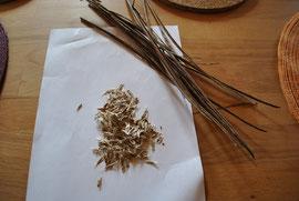 Entnommene Samen