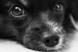 ペットと飼い主の間にたって、話し合い、ペットの行動を修正していく専門家