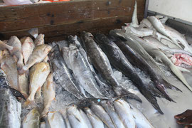 Fish market catch in Georgetown, Guyana