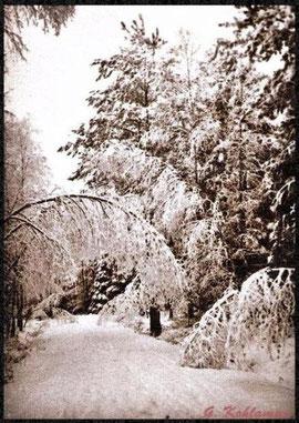 Winterwald, Grimma 1937 G. Kohlmnn