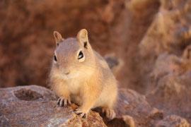 Foto: Eichhörnchen