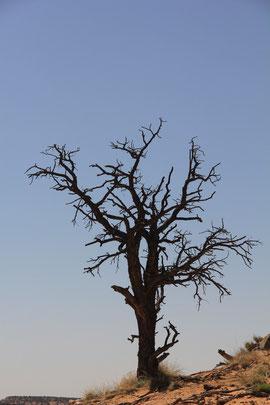 Foto: Baum am Burr Trail
