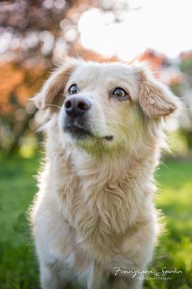 Franziska Spohn Fotografie - Outdoorshooting, Tierfotografie, Hundefoto