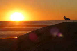 "Letzter ""Sunset"" am Pacific Beach, San Diego."