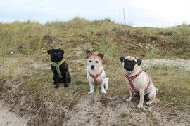 Die drei Grazien in den Dünen