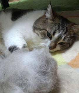 換毛期の猫