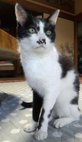 18歳の老猫