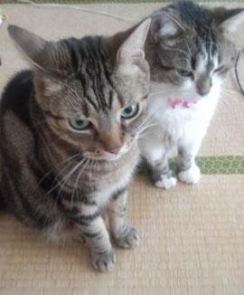 起きるのを待つ猫たち