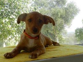 Jierla, Hund des Jahres 2012