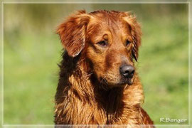 Gundog´s Choice Aspen