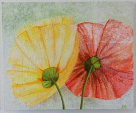 Doppelblüte, 50 x 60 cm