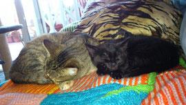 Salem, adoptado.