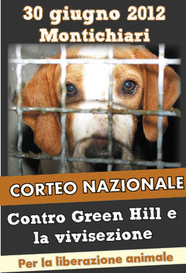 fermare green hill dog angels