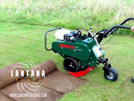 Cortatepes Groundsman TMC26