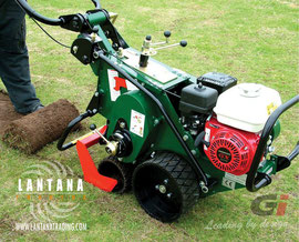 Cortatepes Groundsman TMC46