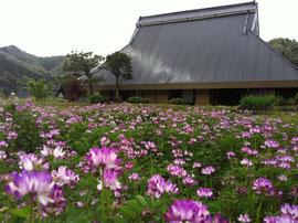 Furumaya House in spring