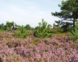 "Fahrrad-Touren im Naturschutzgebiet ""Küstenheide"""