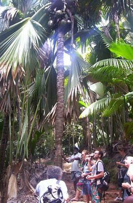 visita escursione valle de mai Seychelles