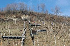 """Die Arbeiten im Weinberg beginnen schon im Winter: Im Bild der Rebschnitt in der steilen """"Leiten"""" bei Missian."""