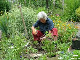 Ruth Ruck bei der Arbeit im NABU-Schaugarten, wie wir sie kennen.    Bild: M. Buck (07.07.2007)