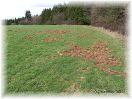 zerstörte Grasnarbe