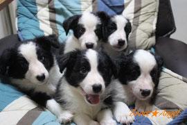 写真クリックで子犬ブログへ