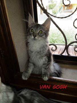Firelynx Van Gogh