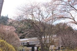 桜 姫宮林間学校前