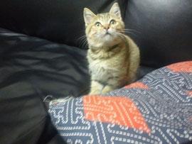 (有)岩津塗装はネコが大好きです^^マハチャン