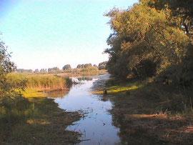 Im Naturschutzgebiet Biedensand