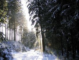 Winter am Hardberg (593m ü. NN) bei Siedelsbrunn