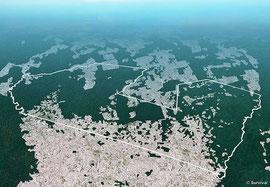Este gráfico basado en imágenes captadas vía satélite muestra la extensión de la tala ilegal en un territorio awá. ©Survival